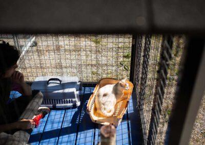 Módulo exterior de un Bungalow gatuno